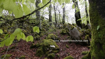 Circuito senderismo en otoño en la Selva de Irati (Pirineo, Navarra, España) -4 días- Salidas 9/10, 30/10 y 6/11/20