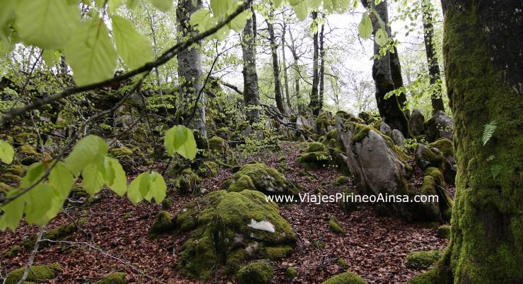 Circuito Senderismo por el Valle de Baztán y la Selva de Irati -4 días- Salida 5 diciembre, Puente de la Constitución